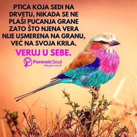 ptica.jpg